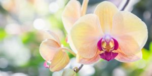 Растения могут спать под землей десятки лет