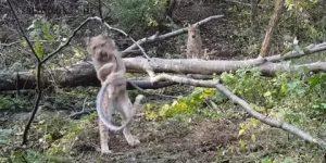 Видео: В Приморском сафари-парке рысь устроила схватку со змеей