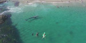 Калифорнийский курорт посетил кит: видео