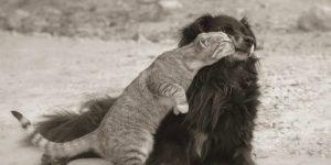 Учитесь любить у животных. Видео