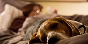 Стоит ли позволять собаке спать вместе с вами