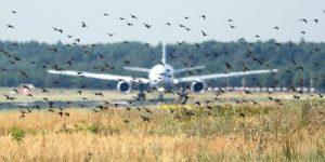 На защиту лайнеров от птиц потратят 5,6 миллионов рублей