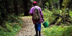 Остаться в живых: спасатели МЧС рассказали, что делать, если вы заблудились в темном лесу