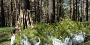 Кто в лес, тот по дрова