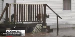 Священник спасает котят во время урагана «Флоренс»: видео