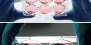 Котлеты из клетки