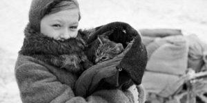 Рассказы о легендарных кошках, переживших блокаду Ленинграда