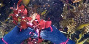 Подводный мир Матуа: что прячется в глубинах Тихого океана у берегов острова