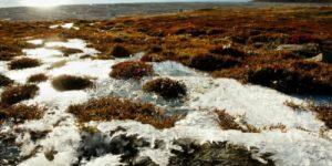 Что несет глобальное потепление для северных районов?