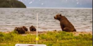 Косолапый оставил охотников без еды: видео
