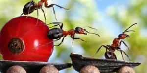 Уволить муравья!!!