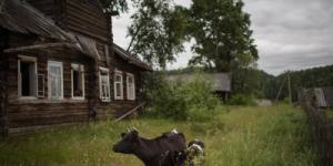 Почему вымирает срединная Россия