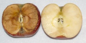 Почему яблоки становятся коричневыми на самом деле?