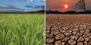 Изменение климата может уничтожить более половины видов Амазонии