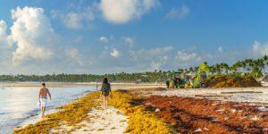 Цветение водорослей в Атлантике принимает угрожающие масштабы