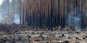 Китайцы спилили всё: Кто на самом деле уничтожает наш лес