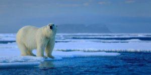 Льды Арктики тают на 70 лет быстрее
