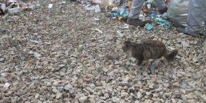 500 рублей с квартиры: назван размер мусорного сбора в Свердловской области
