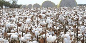 Могло ли быть хуже, или Стерилизация населения Земли через ГМО