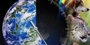ООН: миллион видов находится на грани полного исчезновения