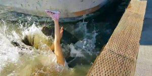 В Канаде морской лев потащил ребенка в океан