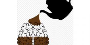 Кофеин уменьшает размер мозга, выяснили ученые