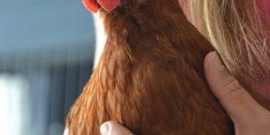 Человек на генетическом уровне похож на курицу и огурец