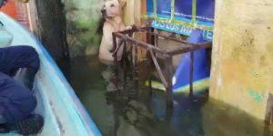 Собака попала в ряды морских пехотинцев, которые её спасли во время наводнения в Мексике