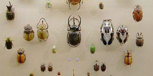 Строгая симметрия в миниатюре природы. Жуки и самолеты будущего