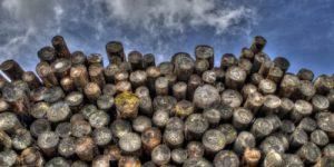 Замена нефти на биотопливо таит смертельную угрозу