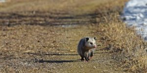Жизнь в природе: убеги, замри или умри!..