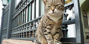Стала известна сумма, которую меценат из Франции завещал эрмитажным котам