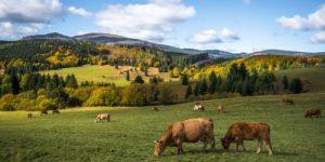 Отказ от мяса не решит проблему глобального потепления