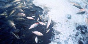 Из-за жары рыба в водоёмах оказалась под угрозой гибели