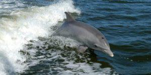 Росприроднадзор назвал причины гибели дельфинов
