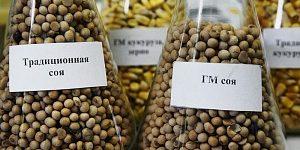Минсельхоз выступил за упрощённый допуск ГМО в Россию