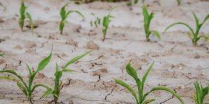 Метеорологи Европы фиксируют сильнейшую засуху
