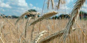 Из-за глобального потепления Россия и Канада станут новыми центрами производства еды