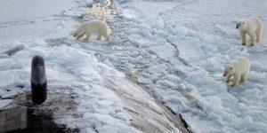 США осознают угрозу китайско-российского альянса в Арктике